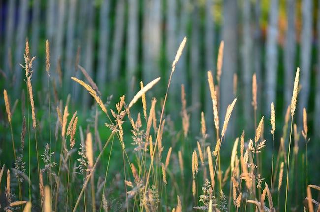 Wild Gardening | Gartenblog | Review Juni 2017