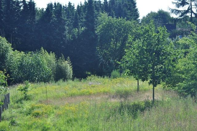 Wild Gardening | Gartenblog | Review Juli 2017