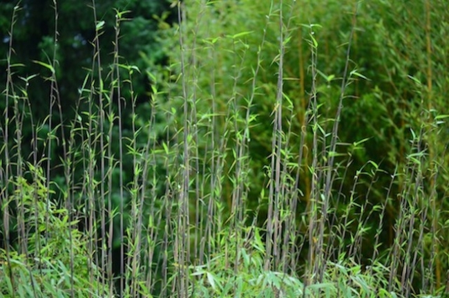 Gartenmoment 2013