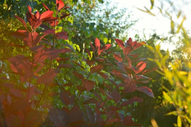 Blog | Wildgardening | Gartenmomente 2016